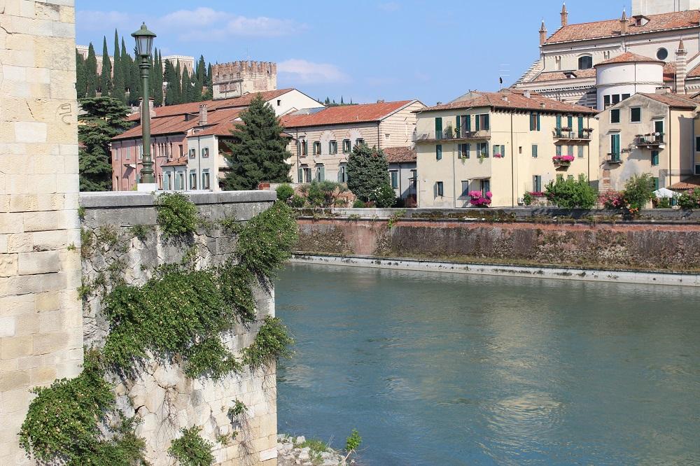 Piante di capperi sulle mura di Verona