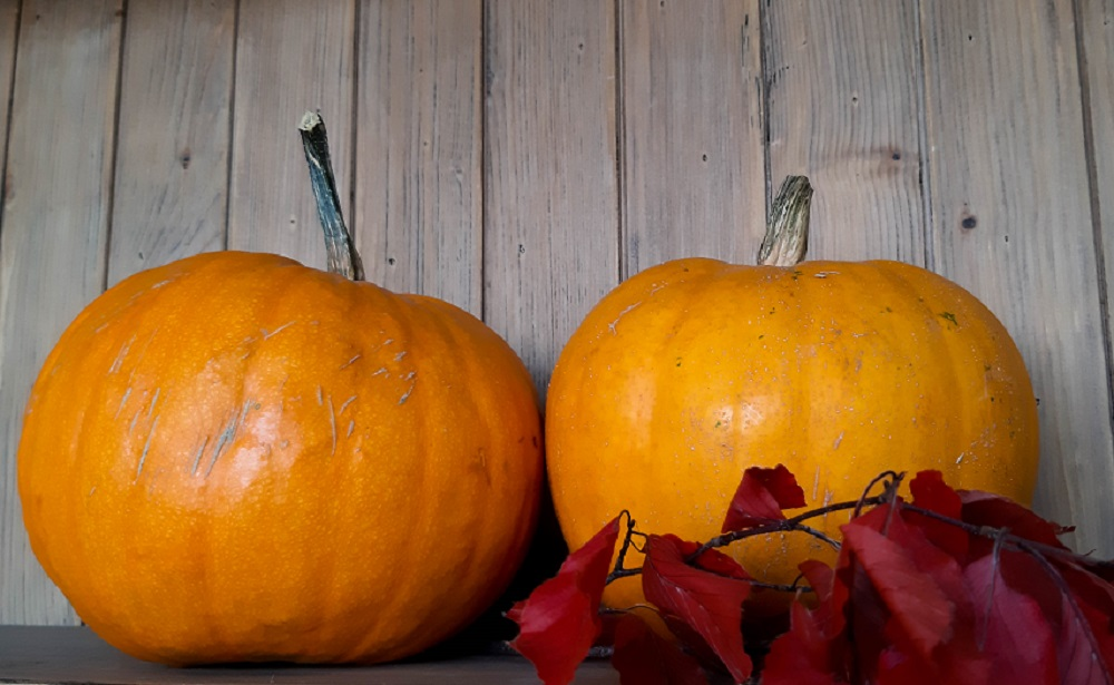 zucche pronte per la festa di Halloween