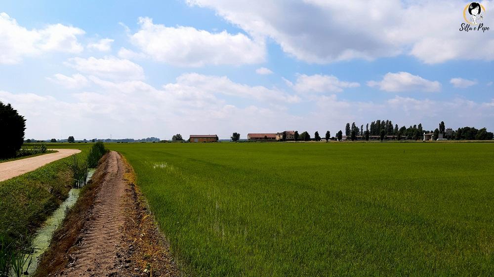 coltivazione di riso nella campagna veronese di Vò Pindemonte